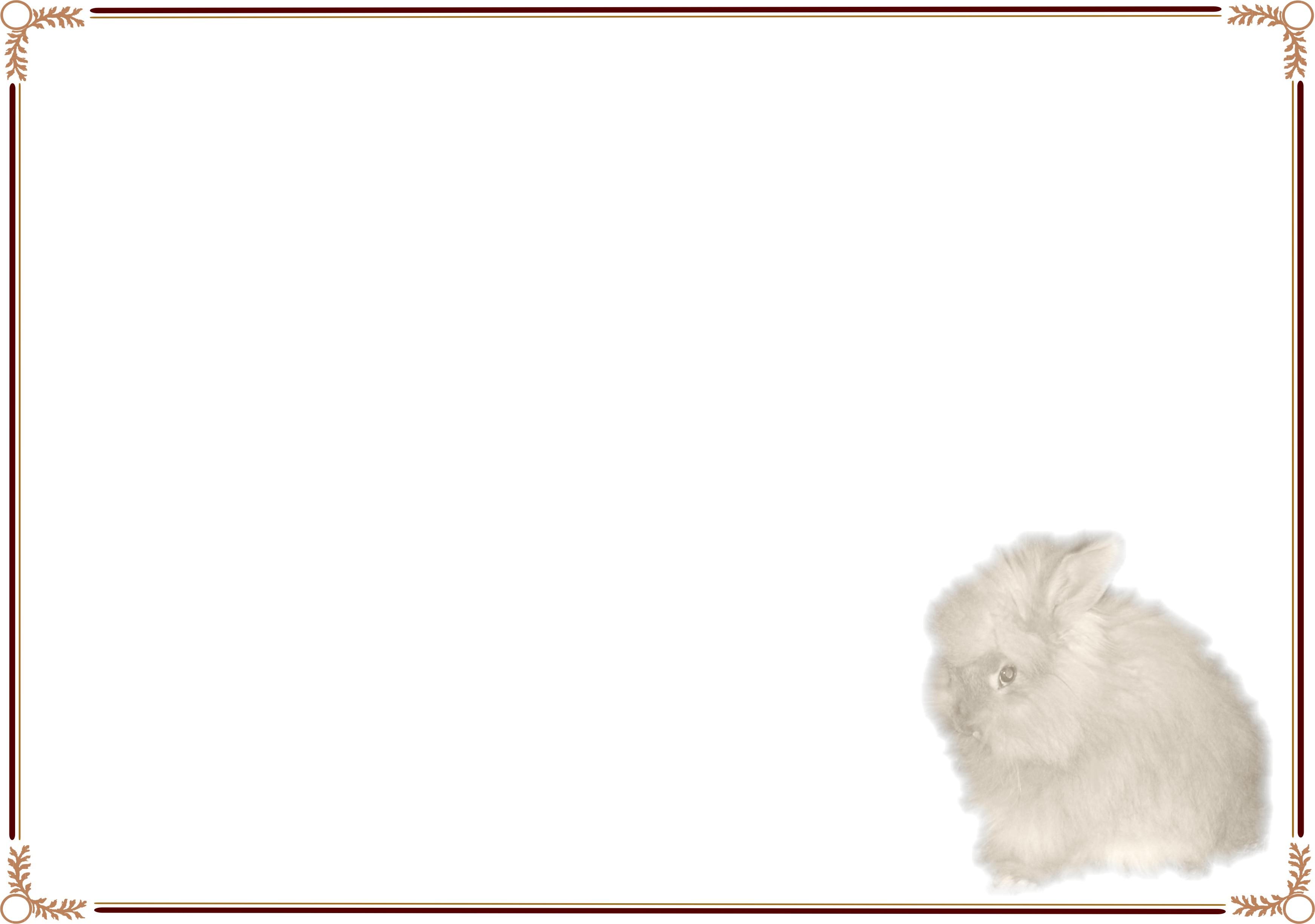 Rabbit - English Angora 02.jpg Rabbit